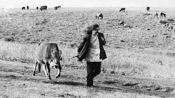 La vaca1